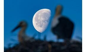 Rekordhosszú életet élt egy Magyarországon meggyűrűzött gólya
