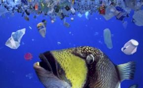 Egy 18 éves srác felfedezése megtisztítja a vizet a műanyagoktól