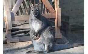 Egyszer csak kenguru szaladt el a bicikli elől Dunaalmásnál – videó