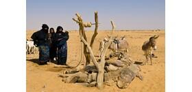 A Szahara veszélyeztetett állatai isszák meg a kínai olajkutak levét
