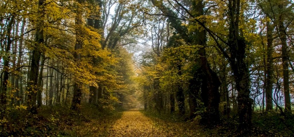 Bekacsint az ősz, tizenöt fokos lehűlés jön