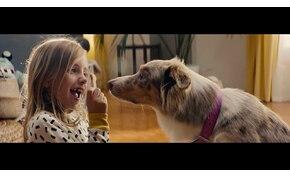 Szívfacsaró az IKEA kutyás reklámja