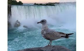 Zsolt utazása: közelről is megnéztük a Niagara-vízesést – galéria