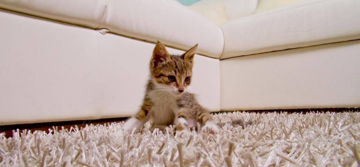 Íme a világ legkisebb macskája – videó
