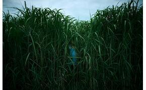Stephen King legújabb adaptációjában támad a magas fű