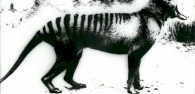 Elkésett az emberiség: akkor került a védett állatok listájára, amikor már kihalt