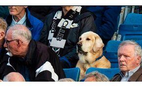 Még a kutya is szereti a skót focit