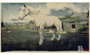 A világháború a kihalás szélére sodorta, később új életre kapott a világ legnagyobb lova