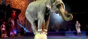 Szlovákiában betiltották az állatok szerepeltetését a cirkuszokban