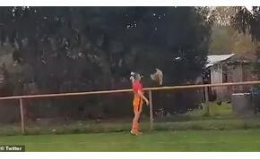 Meccs közben rugdosott halálra egy csirkét, kiállították – videó