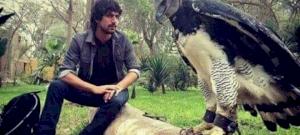 Madárjelmezbe bújt embernek tűnik, miközben a világ egyik legnagyobb sasa – videó