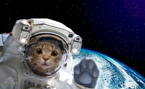 Galaxisok szőrös ura: ő volt az első cica a világűrben – videó