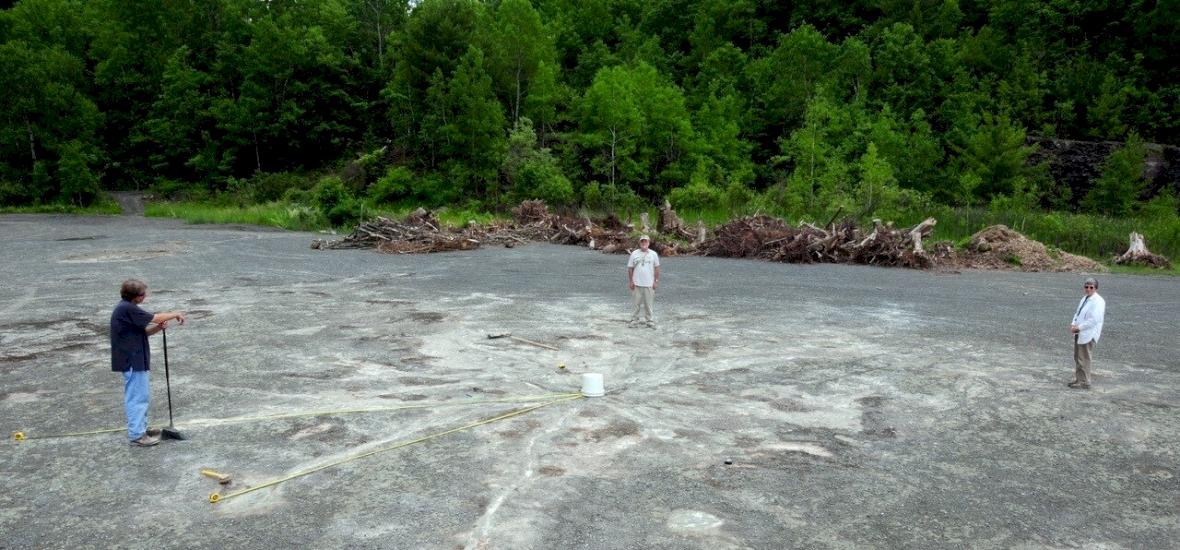 Egy elhagyott kőfejtőnél fedezték fel a világ legöregebb erdejét