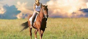 Miért alszanak állva a lovak?