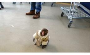 Betotyogott az IKEA-ba egy kabátos majom, a többi már történelem