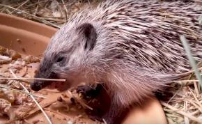 Kisfilmet kaptak a 2019-ben megmentett állatok