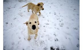 Fontos tudnivalók a petárdázástól megijedő kutyák gazdái számára