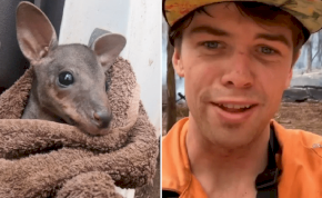 Kengurubébit mentett ki a tűzből egy ausztrál tűzoltó – videó