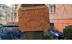 Egy debreceni fiú figyelmeztet: vigyázzunk a sünikre!