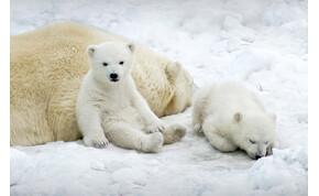 A jegesmedvék etetése tilos! – az előadás, aminek díszletei hulladékból készülnek