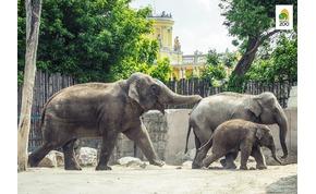 Az Állatkert zseniálisan reagált Schobert Norbi gondolataira