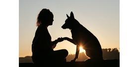 Tudod, hogy mit jelent, ha a kutyád mélyen a szemedbe néz?