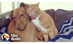 Rettegő kutyát vigasztal hű társa, egy cica – videó