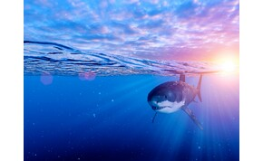 Végül is így is lehet reklámozni a cápás tematikájú filmeket – videó