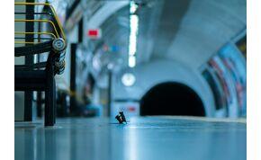 Morzsáért civakodó egerek – lenyűgöző fotó készült