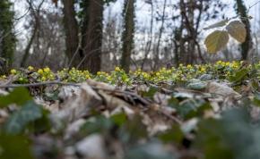 Megmutatja oroszlánkörmeit a tél, majd folytatódik a tavasz