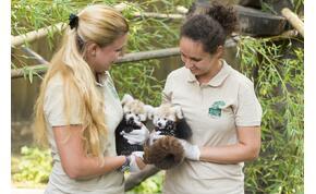 Állati udvarlás – bemutatják a Nyíregyházi Állatpark dolgozói