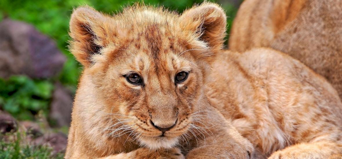 Példaértékű döntés: Hollywood nemet mondott az egzotikus állatokra