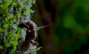 Zombit csinál a hangyából a gomba, hogy aztán könyörtelenül kivégezze – videó