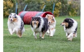 Érdekes felfedezést tettek magyar tudósok a kutyák orrával kapcsolatban