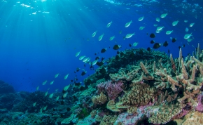 Lenyűgöző mélytengeri felfedezést tettek Ausztrália délnyugati részén