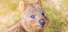 Rejtély: tényleg mosolyog ez az állat vagy csak az evolúció viccel meg minket?