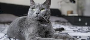 A macska tényleg érti a nevét?