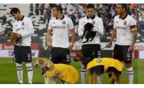 Örökbefogadható kutyákkal sétáltak ki a pályára a focisták – vieó