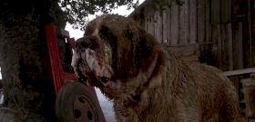 A denevér megharapta a kutyát, gyilkos fenevad lett belőle – videó