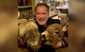 Arnold Schwarzenegger karanténba vonult egy pónival és egy szamárral