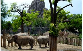 Így zajlik az élet a bezárt Fővárosi Állatkertben – videó