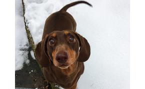 Rolo túlságosan örült, hogy otthon van a gazdi – kificamodott a farka