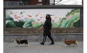 Állatkínzás, ha a karanténból így sétáltatod a kutyádat? – videó