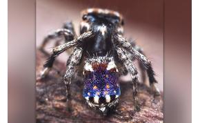 Új pókfajt fedeztek fel: olyan a mintája, mint egy Van Gogh-festmény – képek