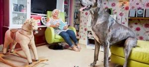 400 kiló hús, szőr és izom: ők a világ legnagyobb kutyái – videó