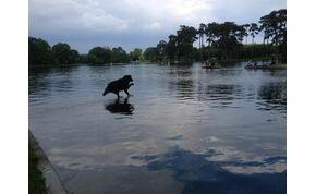 Ez a kutya megtanult a vízen járni vagy másról van szó? – galéria