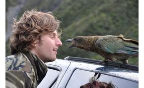 Egy állatfaj, amely kipusztul, mert enyelegni akar a támadóival – videó