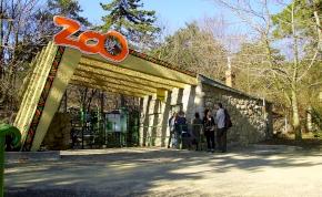 Csodálatos: az emberek összefogtak a pécsi állatkertért