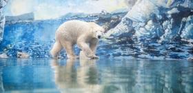 Dúl a szerelem a nyíregyházi jegesmedvék között – képek