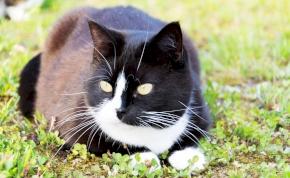 Egy macska, aki hőstettével örökre beírta a nevét a történelembe